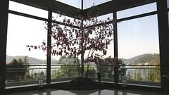 06.粉紅小卡作成的櫻花樹