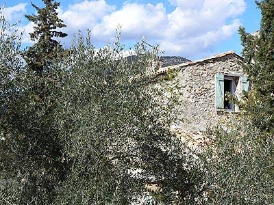 encore des oliviers.jpg