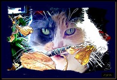 queen kitty Ms. Marbles...1 (driscollm459) Tags: cats pets felines catswclass