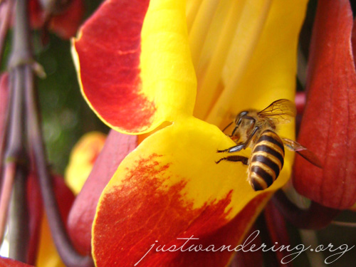 Ilog Maria Honey Bee Farm 01