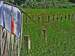 Abandoned (Gilbert Rondilla) Tags: camera color abandoned nature field horizontal photomanipulation photoshop point photography photo nikon shoot philippines explore swamp gilbert filipino posts digicam notmycamera hdr own pinoy borrowedcamera pampanga sansimon pns poultryfarm rondilla notmyowncamera gilbertrondilla gilbertrondillaphotography luisianian gettyimagesphilippinesq1