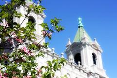 Church (Twitchris) Tags: flowers church virginia spring richmond cathedralofthesacredheart