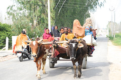 Gypsies (Jaswinder Chohan,.) Tags: travel family people india cart punjab gypsies hoshiarpur