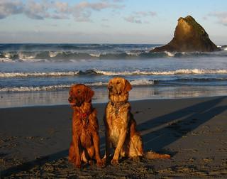 wet, sandy, happy doggies