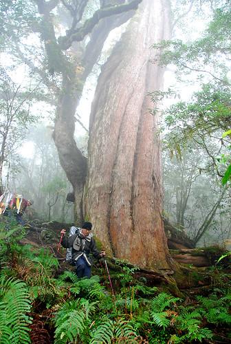 巨木登山口