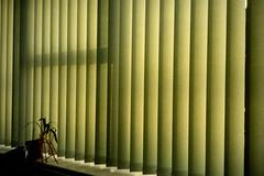 The office (Monkey Tennis) Tags: uk plant film window work 35mm iso200 office bath rangefinder blinds kodakgold expiredfilm kodakgold200 worklifebalance vivitar35ee twerton