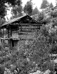 wild (D.R.A.S) Tags: flowers trees wild bw nature forest trek wooden ruins hut ghostly flowry