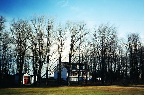 Paddock Café :: 木立の向こうに見えるかわいい家