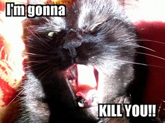 I'm gonna KILL YOU!! (*Tom [luckytom] ) Tags: blue black tom cat interestingness fdsflickrtoys kill im you going mostinteresting ti gatto nero gonna ctm lolcat favcol uccider uccidero luckytom