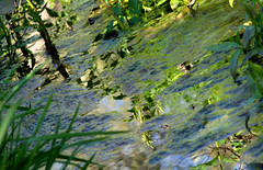 Swamp Tableaux (hurleygurley) Tags: sanfrancisco california blue color reflection green grass ilovenature quiet peaceful swamp inlet algae rgb hg hurleygurley botanica simplepleasures watergreen elisabethfeldman oceaviewpark