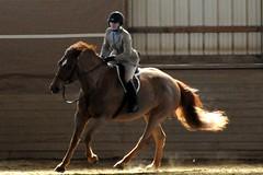 Horse Show II: Uberzaun (nosha) Tags: horses horse newjersey jumping nikon nj competition riding horseshow d300 ringoes ringoesnj hunterdon 18200mm nosha nj123 123njpeople blackriverfarm noshalikes