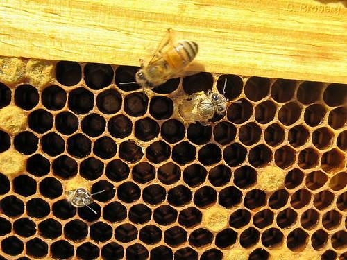 Baby-Bee #1