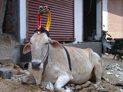 2002-01-23-017-market-polka-dot-cow