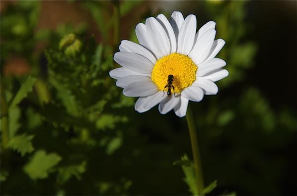 daisy_0157