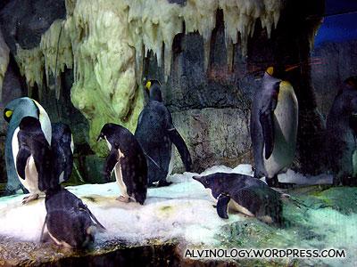The penguin enclosure