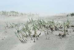 The sand is blowing in the wind (Hindrik S) Tags: sea beach nature strand island coast sand wind sony natuur blowing insel answer eiland borkum a300 wyn sonyalpha flickraward strn 300 alpha300 sonyphotographing