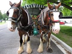 Stanley Park horse carriage tour (Vancouverscape.com) Tags: vancouver stanleypark 2011 stanleyparkhorsedrawntour