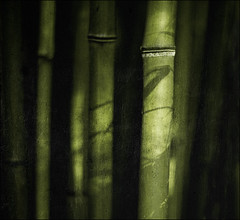 . Tales From The Rice Bowl - Bamboo Story . (3amfromkyoto) Tags: light shadow leaf rice tales bowl bamboo story shade 3amfromkyoto flickr:user=3amfromkyoto