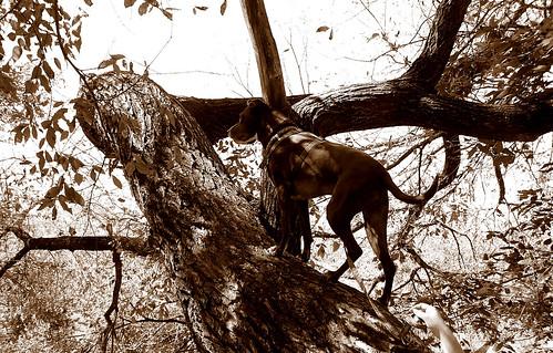 Run Up a Tree