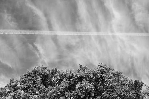Sky Line Tree Line 4187