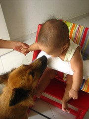 koda likes the high chair, too!