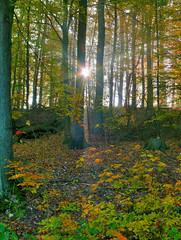 Sun rays through the mist (Rich2012) Tags: autumn trees sun mist leaves fog germany e rays beams hdr flickrphotoaward gettygermanyq4