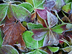 Twin Lakes Frost (Tulse) Tags: frost twinlakes