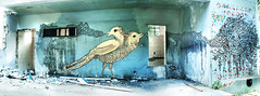 2 head bird - Pssaro ao quadrado (qel - raquel schembri) Tags: street brazil two urban bird art wall painting graffiti head demolition mutant horizonte belo qel selenio