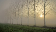 Nebbia e sole (fog and sun)