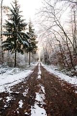 ryoku_de_6174 (ashesmonroe) Tags: wood november schnee trees winter wild sky detail tree nature leaves forest germany deutschland holz wald bäume baum badenwürttemberg sigma1020mmf456exdchsm hohenlohe badenwrttemberg eckartshausen ilshofen landkreisschwäbischhall b¦ume landkreisschw¦bischhall