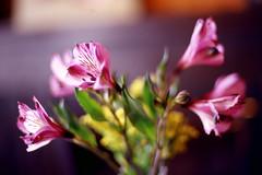 McKinney Coffee Shop Flowers (MrDAT) Tags: film slide kodake100vs e100vs nikonfe2 60mmf28dmicro ektachromee100vs