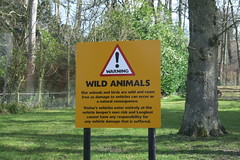 Longleat Safari Park #5