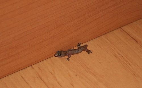 Freaking lizard