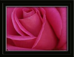 Flower Art 001 copy (bigbobby93535) Tags: art home flowerart sigma105mm