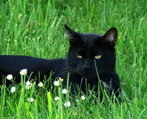Kiki in the grass