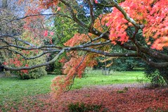 Blowing in the wind.. (Nala Rewop) Tags: autumn color colour colors leaves colours arboretum westonbirt platinumphoto