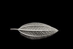 Leaf (JaniceNZ) Tags: leaf blackandwhite texture art shape form simplicity nature plant leafveins leaves