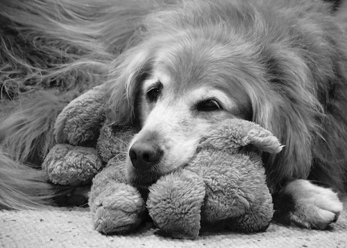 Puff Doggie