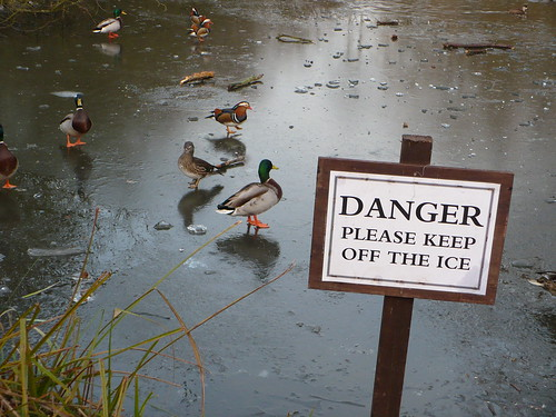 So it's one rule for ducks?