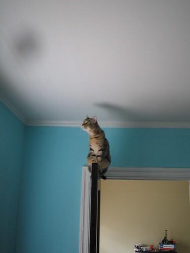 girl kitty on the door