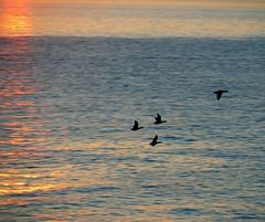 Tonight's sunset - Genoa, December 28 2007 - 2 (cienne45) Tags: friends sunset italy birds liguria cienne45 carlonatale explore genoa natale bogliasco tonightssunset281207genoaitaly exploreexset explore1336