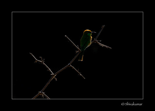 BEEEATER_backlit