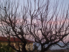 Vallesiriaca3 (Birnardo) Tags: italy roma alberi tramonto natura lazio agriturismo capena raccontarelanatura vallesiriaca salveanatureza llovemypics birnardo bomboetosky