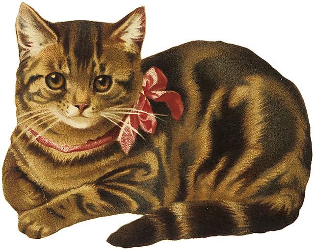 laminas de gatos