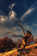 reaching for the clouds (Marc Crumpler (Ilikethenight)) Tags: california trees sunset usa clouds canon landscape hiking trails hills bayarea eastbay ebrpd themoulinrouge roundvalley contracostacounty eastbayregionalparkdistrict tamron1750 sfchronicle96hours 40d abigfave ebparks platinumphoto anawesomeshot colorphotoaward impressedbeauty superaplus aplusphoto focuslegacy theunforgettablepictures canon40d platinumheartsaward betterthangood goldstaraward absolutelystunningscapes ilikethenight marccrumpler ebparksok