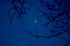 Good Day.. Moon? (Emmy Gee) Tags: blue sky moon dof halfmoon branchs