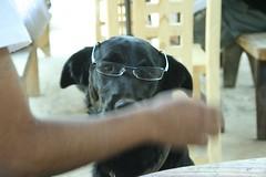 dogs (TheBosque) Tags: dog tourism dogs mexico fun funny tourists michoacan patzcuaro spaz ecovillage semanasanta permaculture erongaricuaro divertida chistoso alternativespringbreak ecoaldea permacultura eronga springbreakmexico cy2008 isacpics cumbreyah