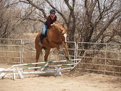 mid jump (lostinfog) Tags: april 2008 mac colorado e300 horse jumping