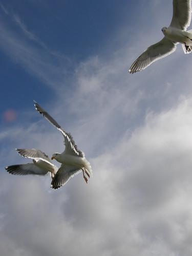 Peeking Seagulls 2
