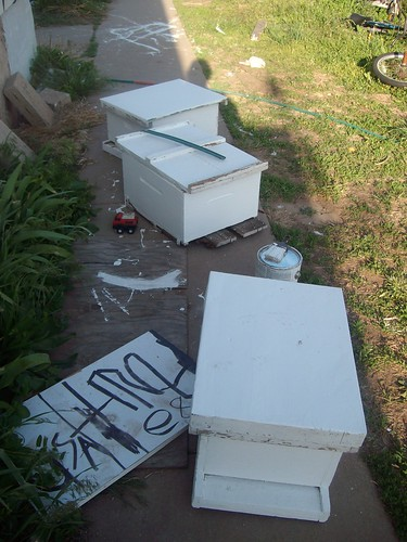 freshly painted bee boxes